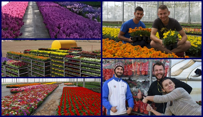 Flowers and staff at Sminro